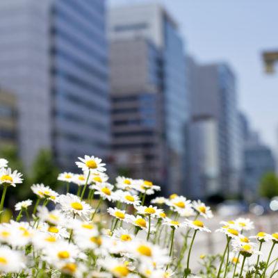 organisatiepotentieel bloei blooming-org